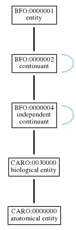 Graph of CARO:0000000