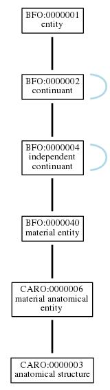 Graph of CARO:0000003