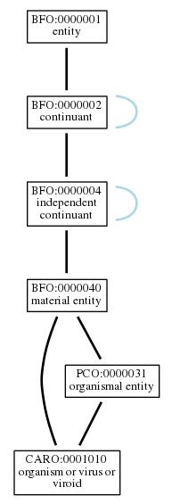 Graph of CARO:0001010