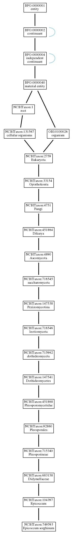 Graph of NCBITaxon:749593