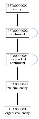 Graph of PCO:0000031